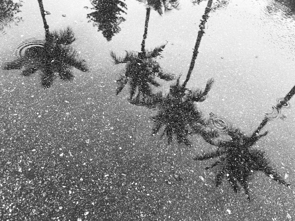 Public Activism Can Help Mitigate Sea Level Rise FloodingProblems