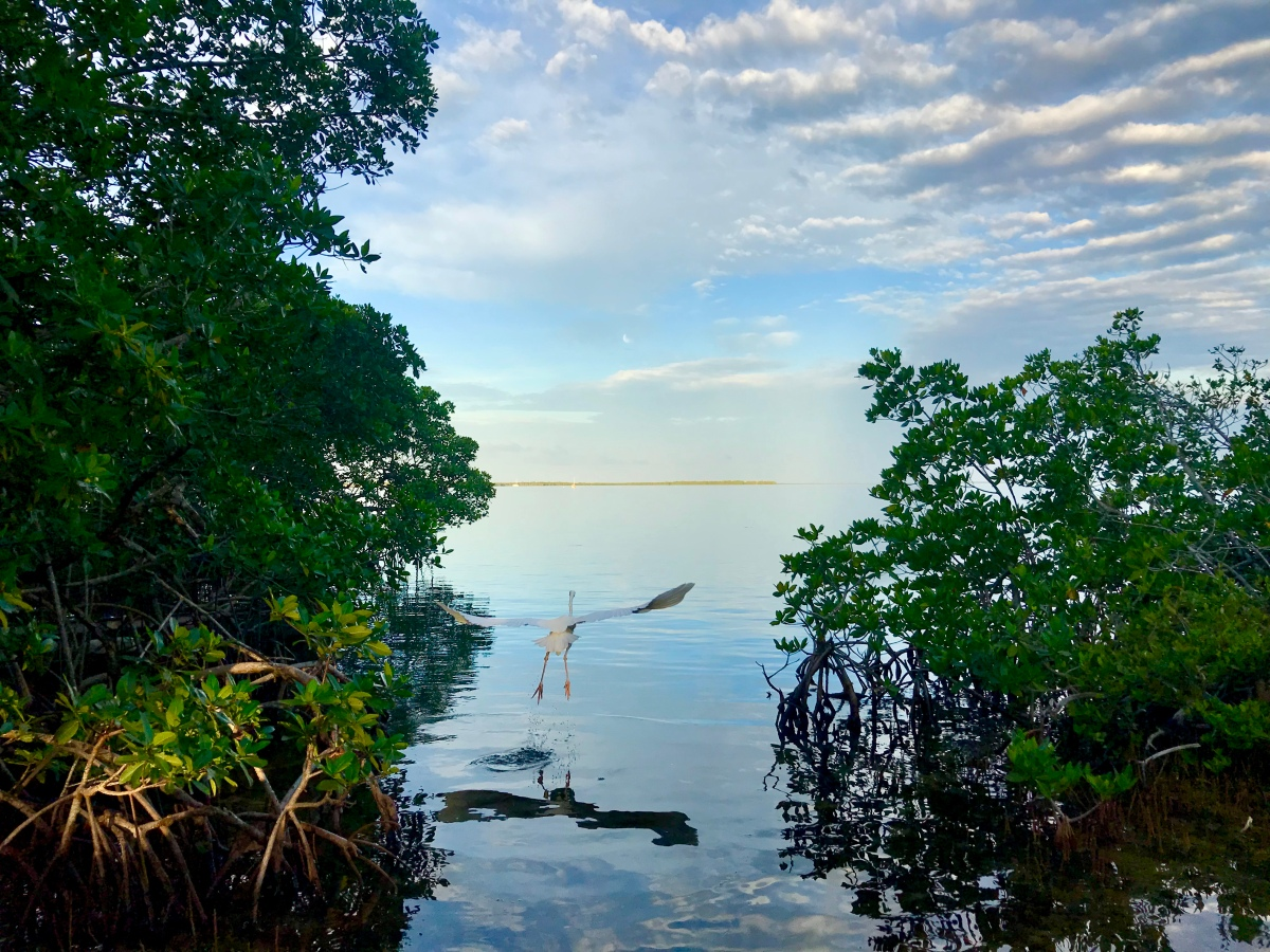 Can We Rely on Mangroves to Provide a Line of Defense against Sea Level RiseFlooding?